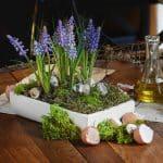 szafirki w doniczce, ogródek z szafirków wiosna 2017 kompozycje wielkanoc