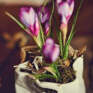 Krokusy w Ceramicznej Torebce