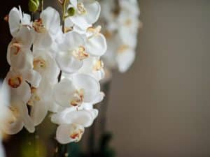 rośliny sztuczne - orchidea