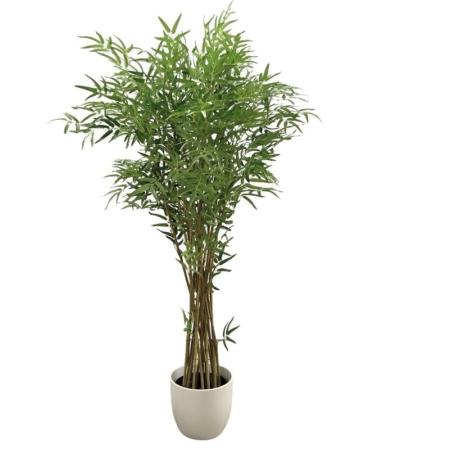 drzewko bambus wysoka jakość