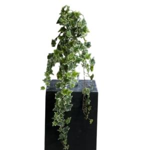 Sztuczny Bluszcz Hedera Biało Zielony 80 cm - Jakość Premium