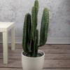sztuczny kaktus karnegia sztuczne rośliny wysoka jakość