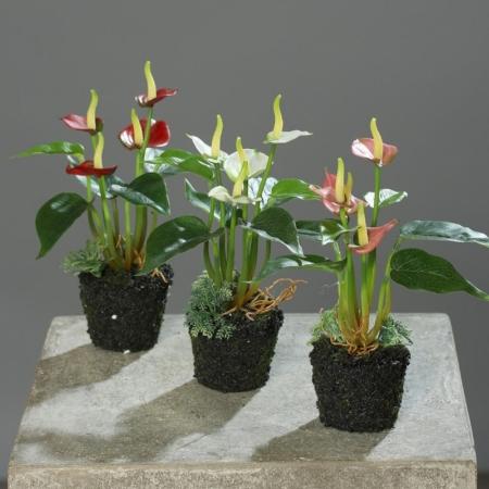sztuczne anturium w ziemi czerwone białe różowe sztuczne rośliny