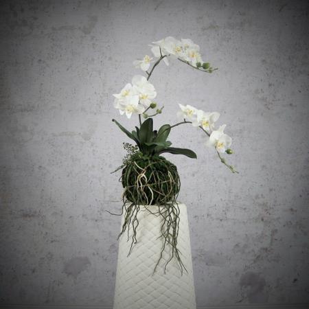 storczyk wiszący wanda biały