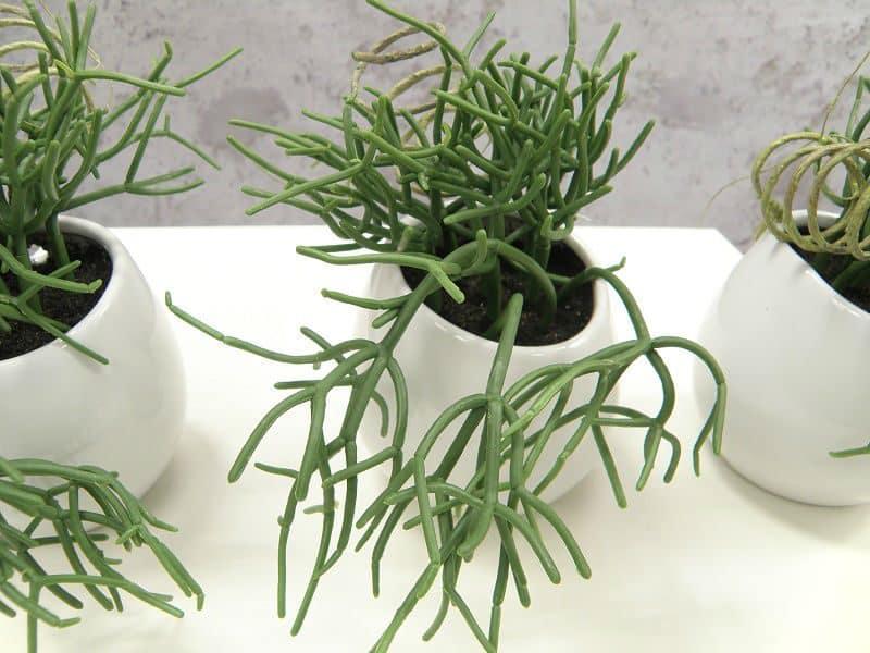 sztuczne kaktusy, sukulenty, skrętnik, wysoka jakość