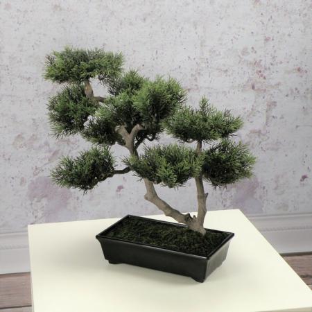 bonsai w donicy wysoka jakość