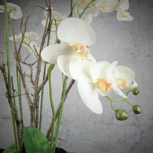 Sztuczny Storczyk - Phalaenopsis w Kuli z Mchu