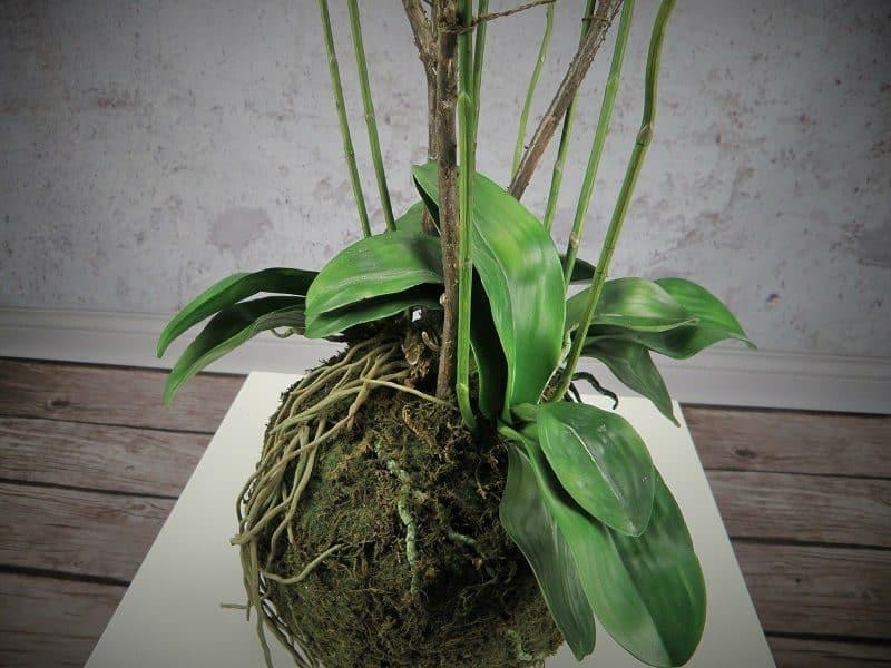 duży sztuczny storczyk phalaenopsis biały w mchu kompozycja