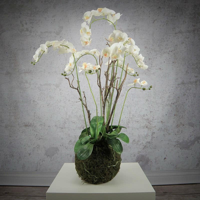 Sztuczny Sorczyk – Phalaenopsis
