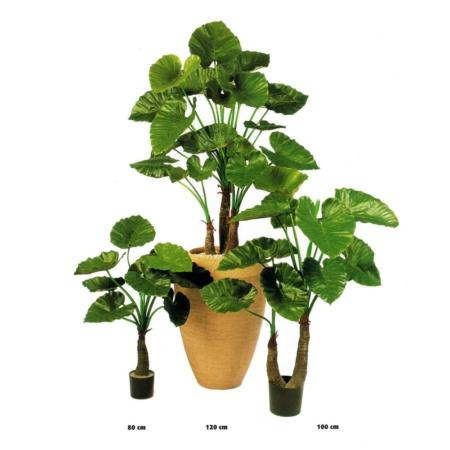 alokazja sztuczne rośliny