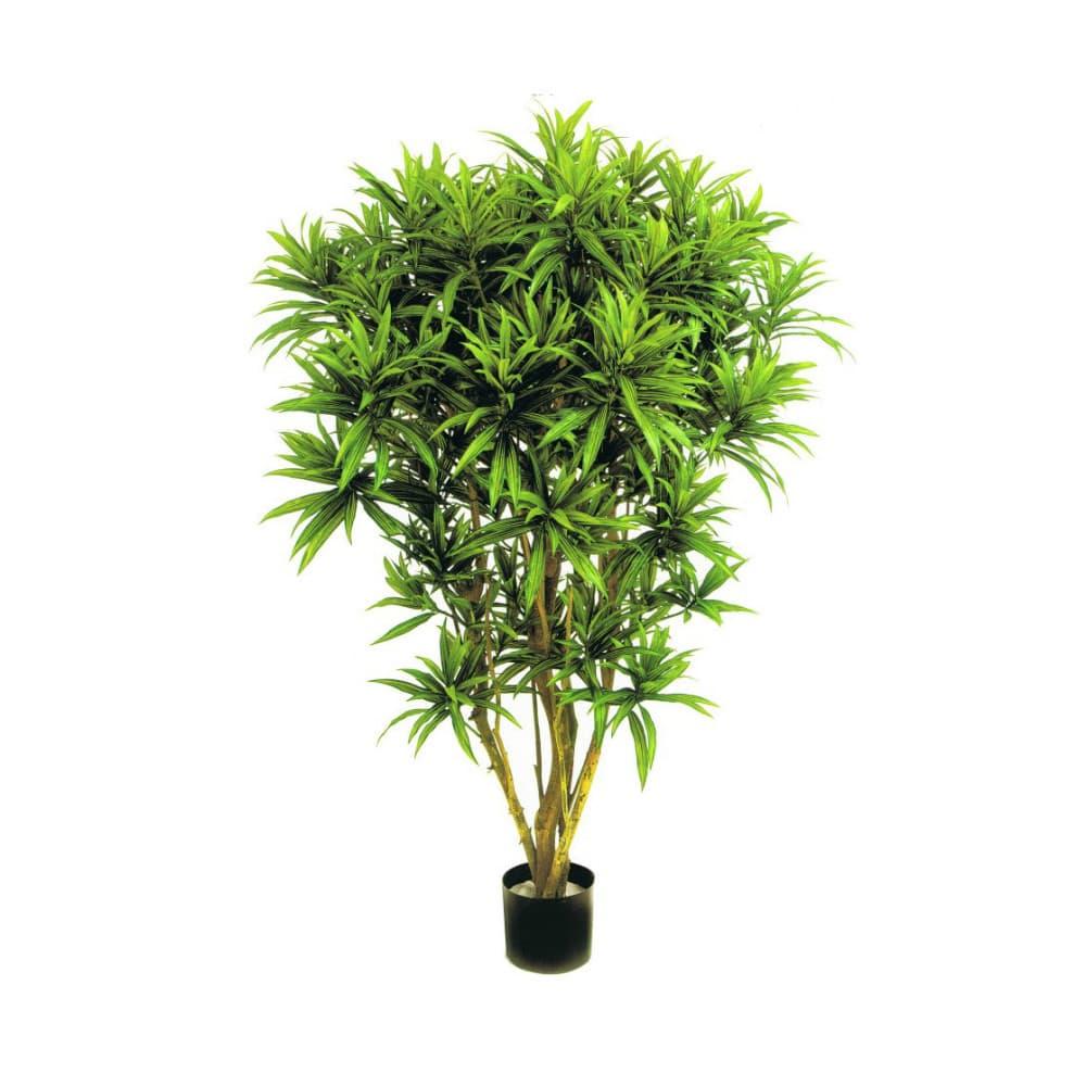 dracena reflexa jamaica sztuczne drzewa