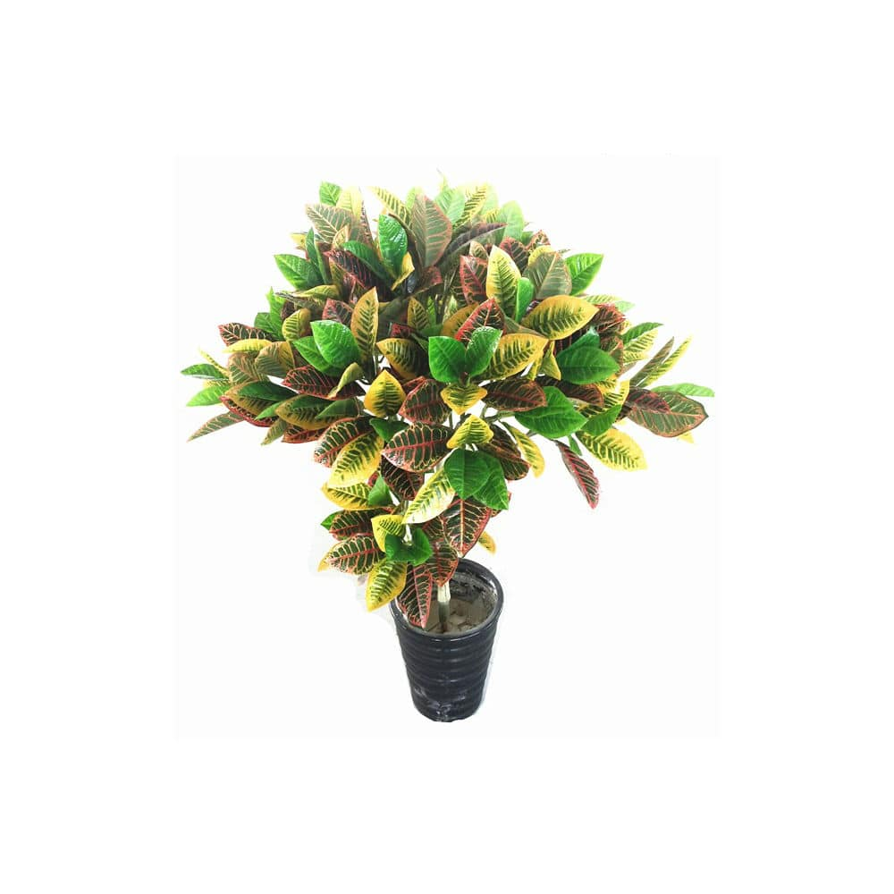 kroton krzew 115 cm
