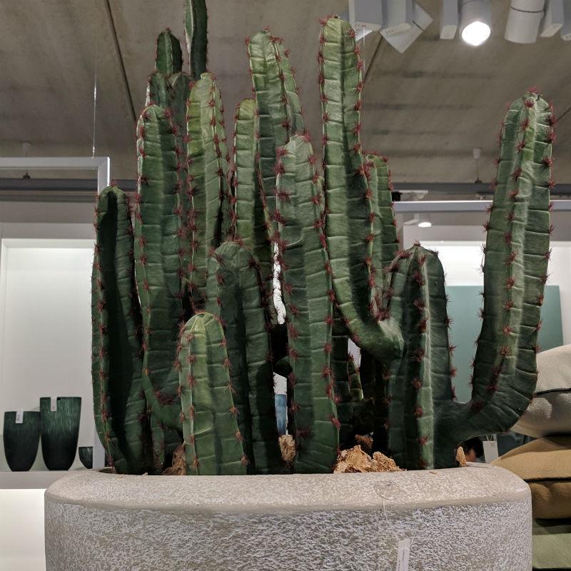 Kaktus Karnegia