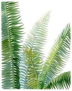 sztuczne rośliny paproć