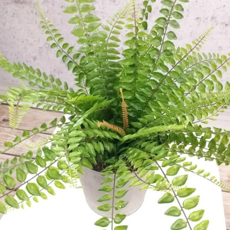 sztuczne rośliny paproć wysoka jakość