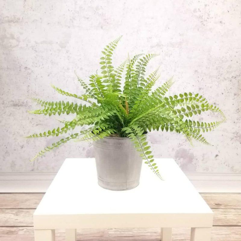 paproć sztuczna – rośliny