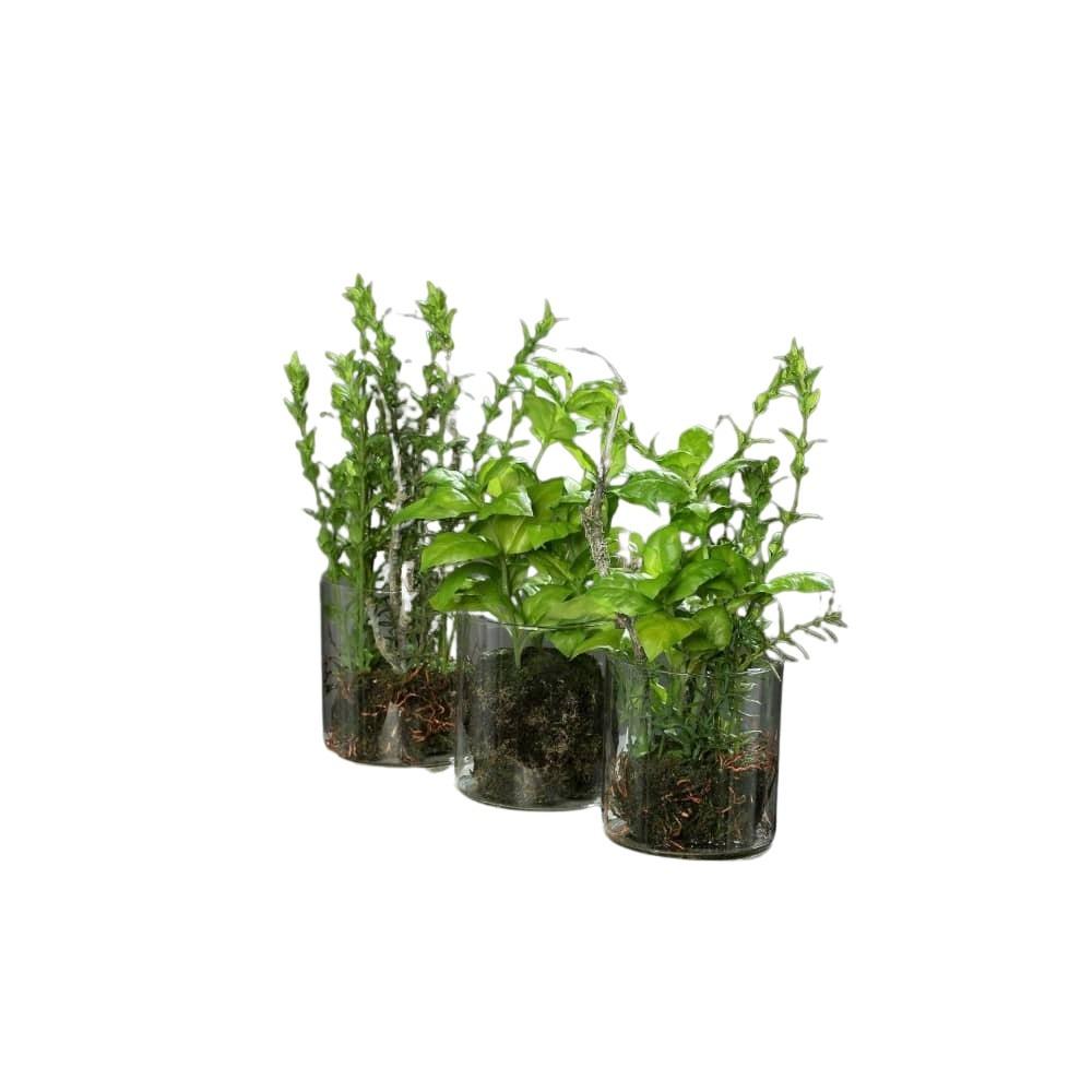 sztuczne zioła szklana doniczka
