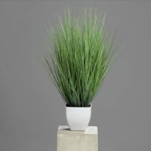 Miskant- Trawa 60 cm - zielona