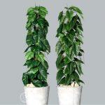 sztuczne drzewa filodendron