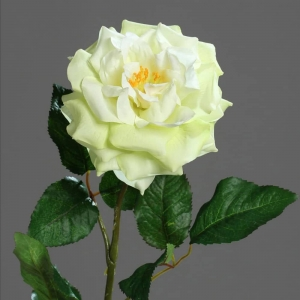 Róża seledynowa 75 cm - Produkt Premium