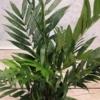 areca sztuczna palma