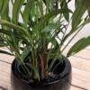 sztuczne drzewa palma areca