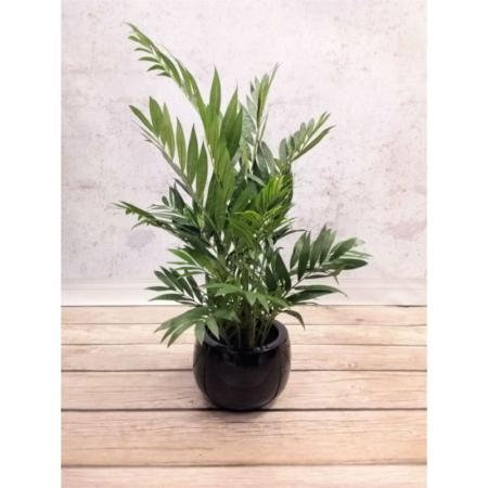 sztuczne rośliny palma areca 110