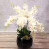 orchidea storczyk sztuczny kompozycja