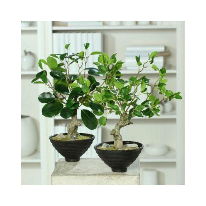 bonsai ficus drzewko
