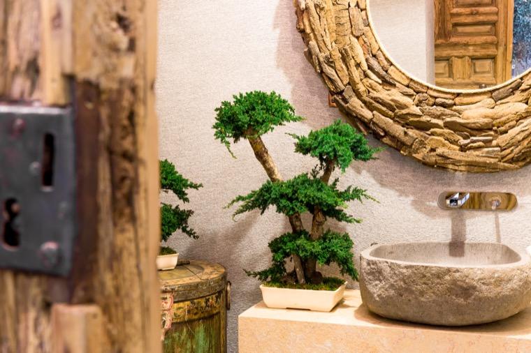 bonsai procumbens stabilizowane roślinny