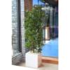 sztuczne rosliny i drzewa dracena