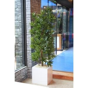 Dracena Reflexa 180 cm - Produkt Premium