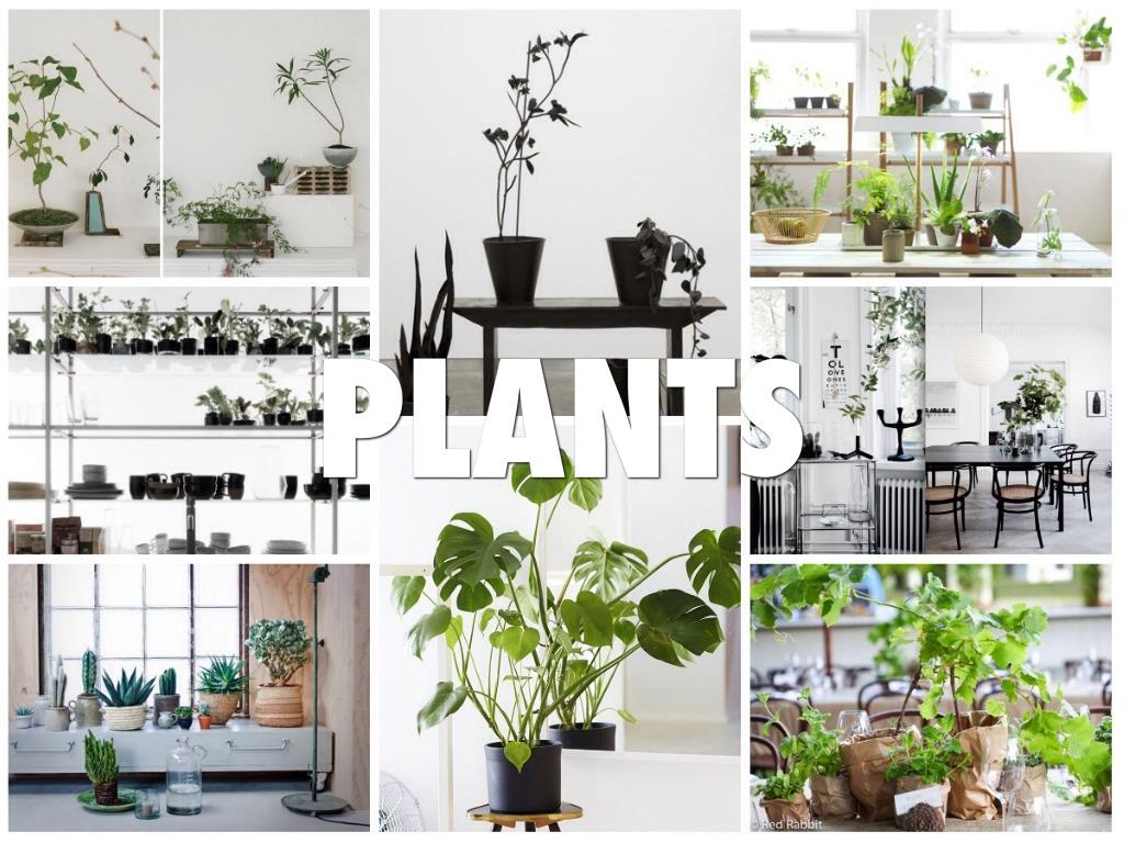 rośliny w minimalistycznym wnętrzu