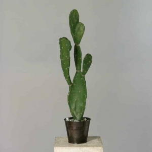 Kaktus Opuncja 78 cm