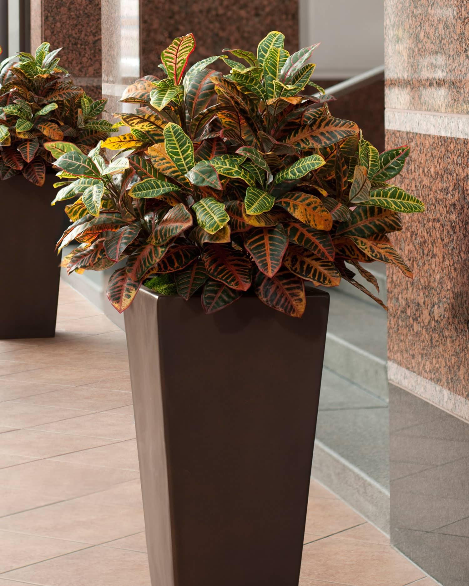 kroton sztuczne roślin