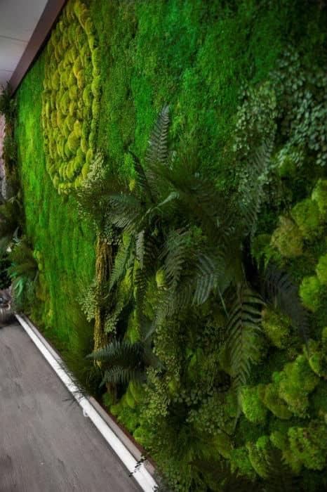 zielone sciany we wnętrzu