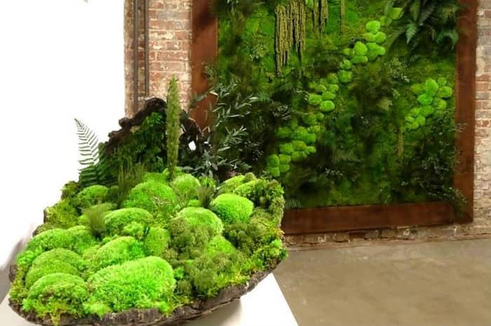 pomysł na aranżacje zieleni w domu