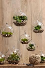 szklane kule z kaktusami