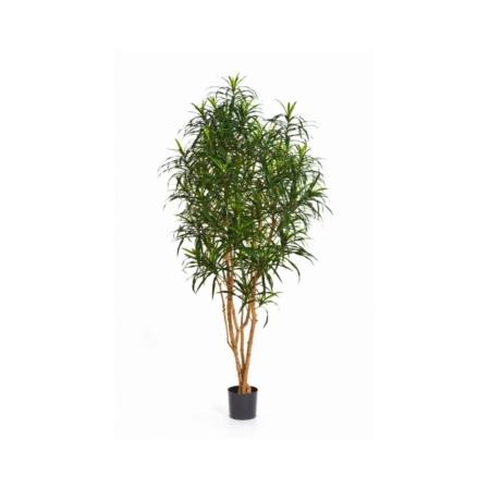 sztuczne drzewa dracena anita