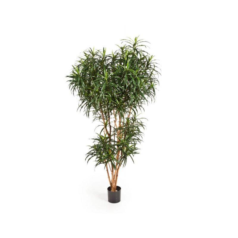 sztuczne drzewo dracena anita