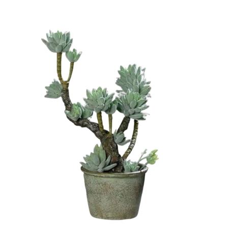 sztuczne kaktusy eszeweria