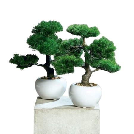 Bonsai w doniczce