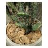 kaktus-3 gałązki aranzacja