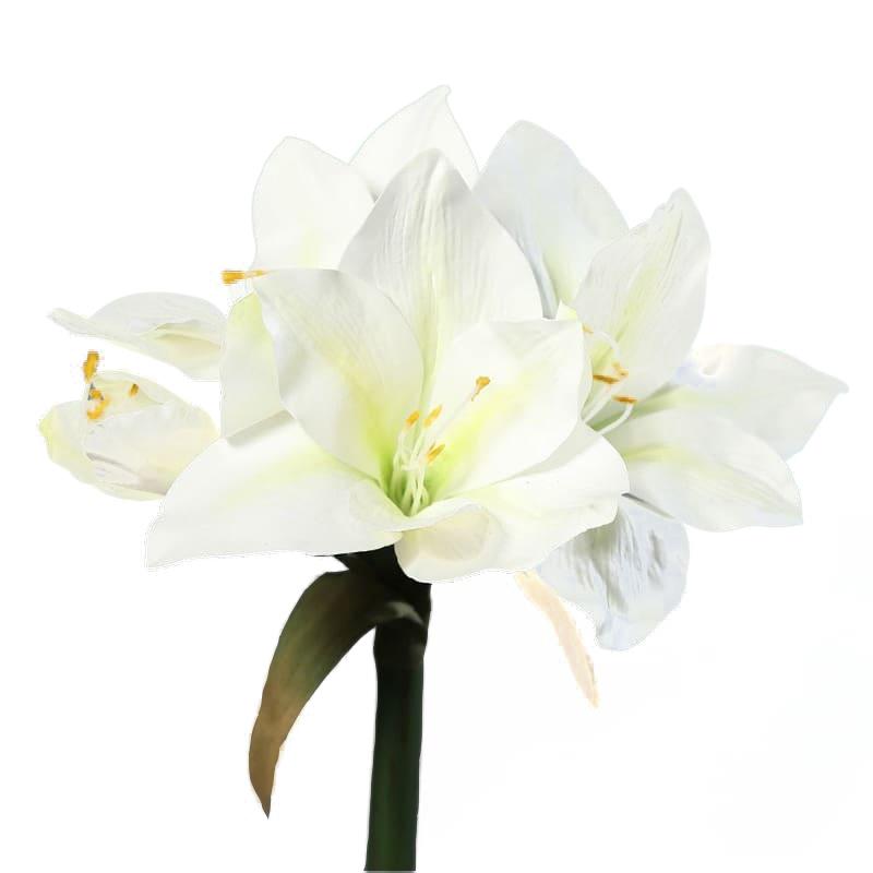 kremowy amarylis 3 kwiaty 1 pak 56 cm
