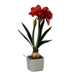 Czerwony Amarylis 3 Kwiaty 1 Pąk Cementowa Doniczka 59 cm