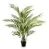 Tropikalna Palma Areka 130 cm