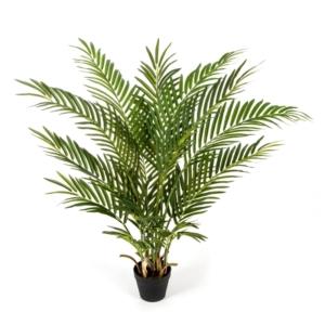 Tropikalna Palma Areka