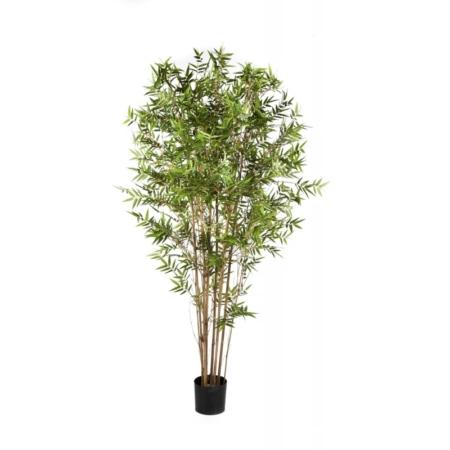 Bambus japoński