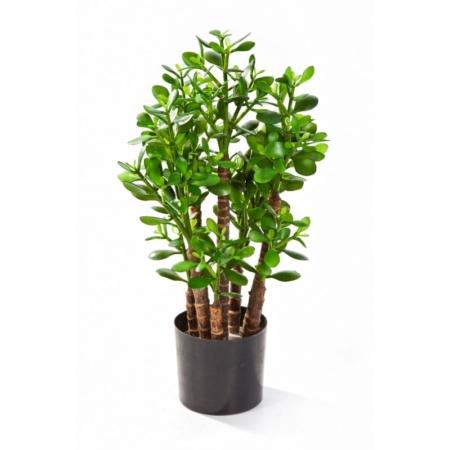 Grubosz - Drzewko Szczęścia 60 cm