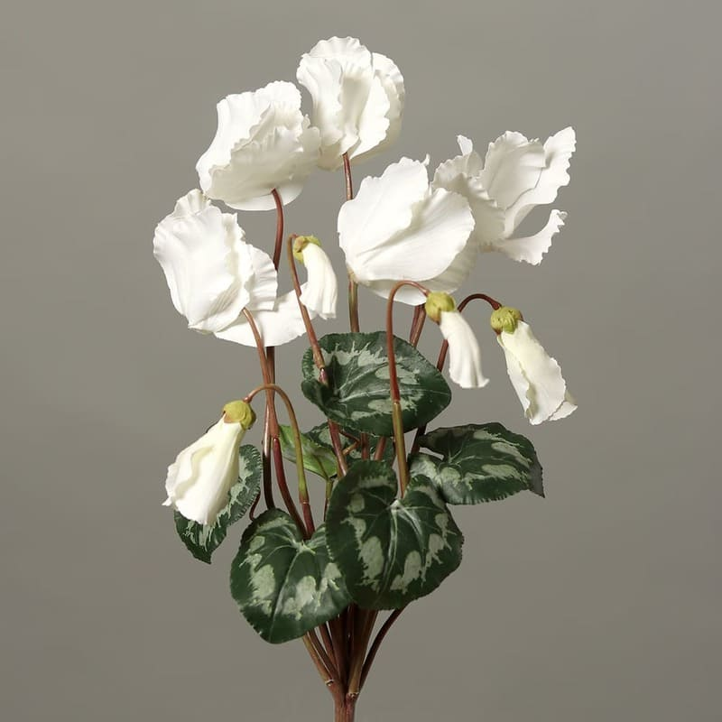 cyklamen gałązka wiele kwiatów 40 cm biała
